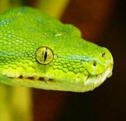 Had z Ráje